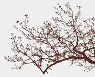 Branch of a blooming tree Royalty Free Stock Photo