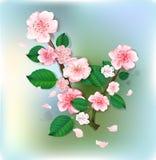 Branch of blossom apple tree Stock Photos