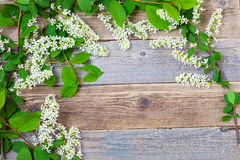 Branch of blossom bird cherry on vintage boards of antique table Royalty Free Stock Image