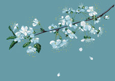 Branch of blossom cherry. Vector branch of a blossom cherry tree on a blue background Royalty Free Stock Photography