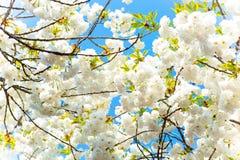 Branch, Blossom, Flower, Sky stock image