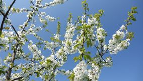 Branch, Blossom, Sky, Spring stock photos