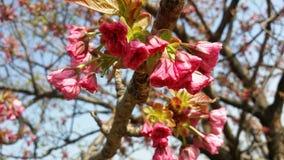 Branch, Blossom, Spring, Pink stock photos