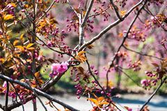 Branch, Blossom, Spring, Plant stock photo