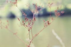 Branch, Blossom, Twig, Close Up stock image