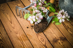 Branch of blossoming apple and garden tools on a wooden surface, Royalty Free Stock Images