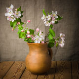 Branch of a blossoming apple-tree in a clay pitcher Royalty Free Stock Photo