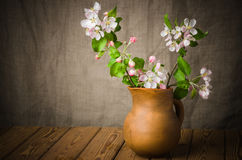 Branch of a blossoming apple-tree in a clay pitcher Stock Image