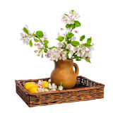 Branch of blossoming apple-tree in clay pitcher on white backgro Royalty Free Stock Photos