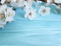 Branch of blossoming cherry, on a blue wooden background. Decorationn Royalty Free Stock Photos
