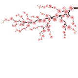 Branch of a blossoming cherry tree. EPS 10 Stock Photography