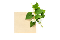 Branch of blossoming jasmine and blank kraft card isolated on wh royalty free stock photo