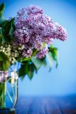 Branch of blossoming spring lilac. On a blue background Royalty Free Stock Images