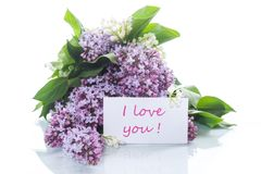 Branch of blossoming spring lilac. On a white background Stock Images