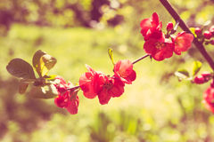 Branch of a blossoming spring tree Stock Photos