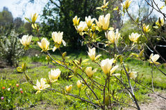 Branch of a blossoming spring tree Stock Photo