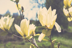 Branch of a blossoming spring tree Stock Image