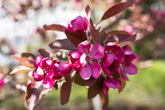 Branch of a blossoming spring tree Stock Photography