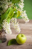 Branch of blossoming spring in a vase Stock Photos