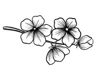 Branch of blossoming tree in graphic black white s. Branch of a blossoming tree in graphic black white style, drawing by hand. Symbol of spring Stock Illustration