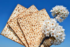Branch of a blossoming tree and matzo Stock Photography
