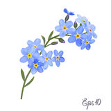 Branch of blue forget-me-not flowers. Royalty Free Stock Photography