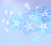 Branch of blue forget-me-not flowers  - vector illustration Royalty Free Stock Photos