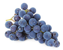 Branch of blue grapes on white background Royalty Free Stock Images