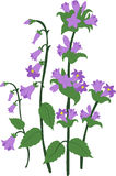 Branch blue hand Campanula bell Stock Images