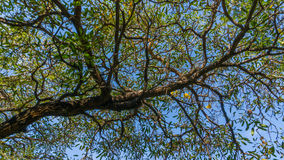 Branch. Es ing beautiful tree against the sky royalty free stock photo