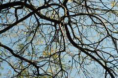 Branch, Branches, Perspective Stock Image