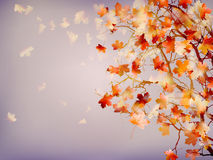 Branch of bright autumn maple foliage. EPS 10 Stock Image