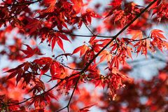 Branch, Bright, Close-up Royalty Free Stock Images