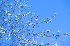 branch with buds against the background of a sky royalty free stock photography