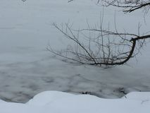Branch buried into the frozen river. Fallen tree branch partly trapped into frozen water Stock Image