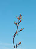 Branch bush. Royalty Free Stock Photography