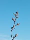 Branch bush. Branch bush near throw flowers Royalty Free Stock Photography