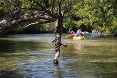 Branch during Canoeing and Kayaking on River Stock Photography