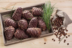 Branch cedar cones and nuts. Royalty Free Stock Photo