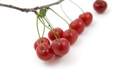 Branch of cherries Royalty Free Stock Photo