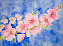 Branch of cherry blossoms against a blue sky. Royalty Free Stock Photography