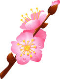 Branch of cherry blossoms. Flowering cherry branch with drops of dew, eps 10 Stock Image