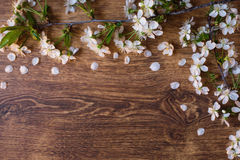 A branch of cherry blossoms on a wooden background Royalty Free Stock Photo