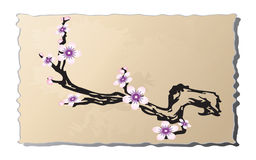 The branch of a cherry on old paper. Stock Images