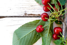 Branch of cherry Royalty Free Stock Images