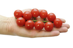 Branch of cherry tomatoes in the hand Stock Photo