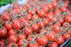 Branch of Cherry tomatoes Royalty Free Stock Image