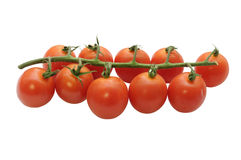 Branch of cherry tomatoes Royalty Free Stock Photos
