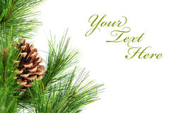 Branch of Christmas Royalty Free Stock Images