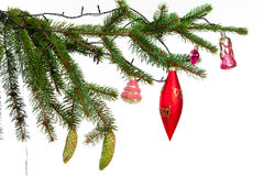 Branch of Christmas fir tree Royalty Free Stock Photos